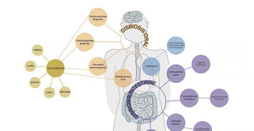 microbiota-cancer-probioticos
